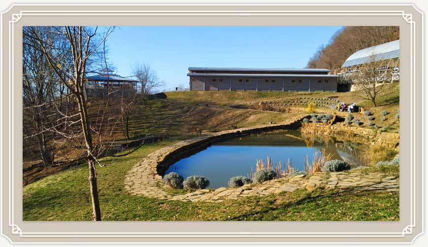 Ферма Экзархо в Сочи: прогулка и контактный зоопарк